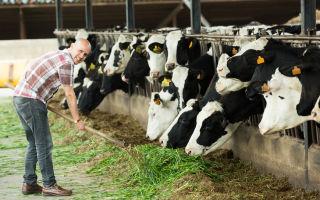 Что такое кфк? как открыть фермерское хозяйство