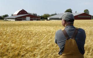 Патент для предпринимателей, занимающихся сельским хозяйством